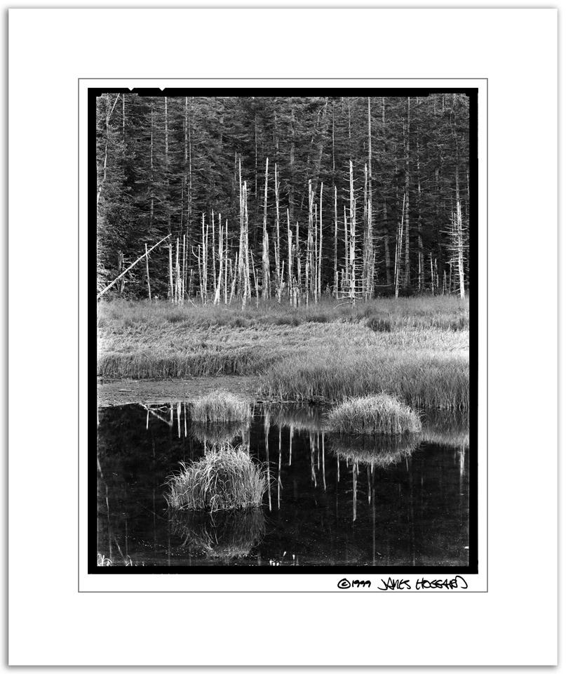 Dead-Tree-Marsh