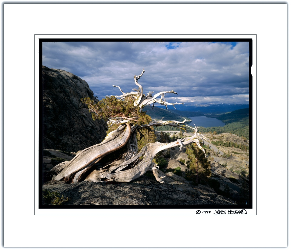 Donner-Summit-Dead-Tree-Color