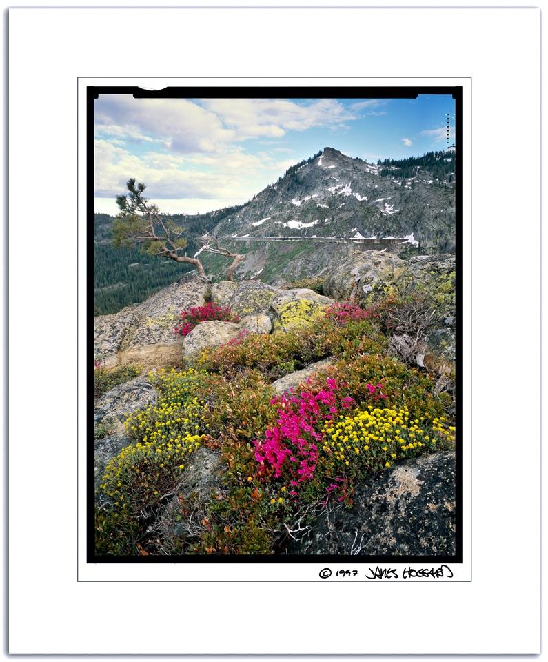 Flowers-Bonsai-Tree-Donner-Peak