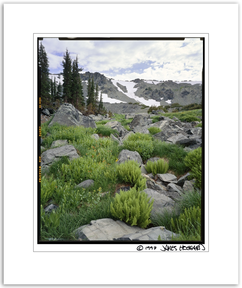 Kalmia-Basin-Ferns