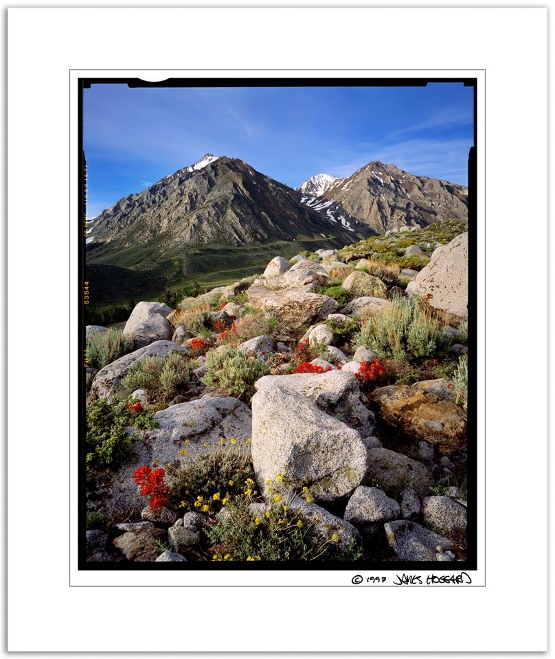 Mcgee-Creek-Morain-Flowers