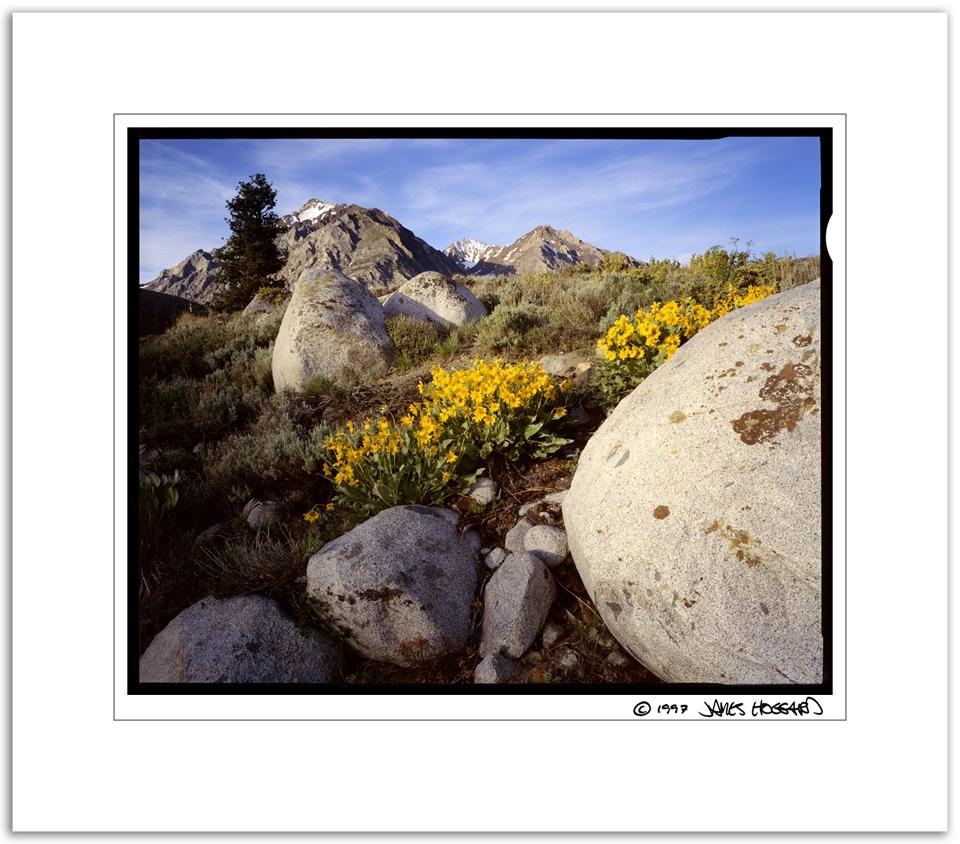 Mcgee-Creek-Yellow-Flowers