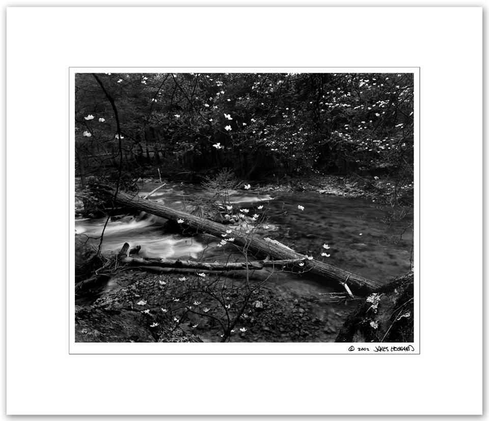 Tenaya-Creek-and-Dogwood-Flowers2