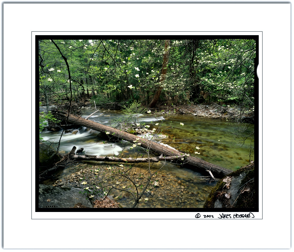 Tenaya-Dogwoods-Color