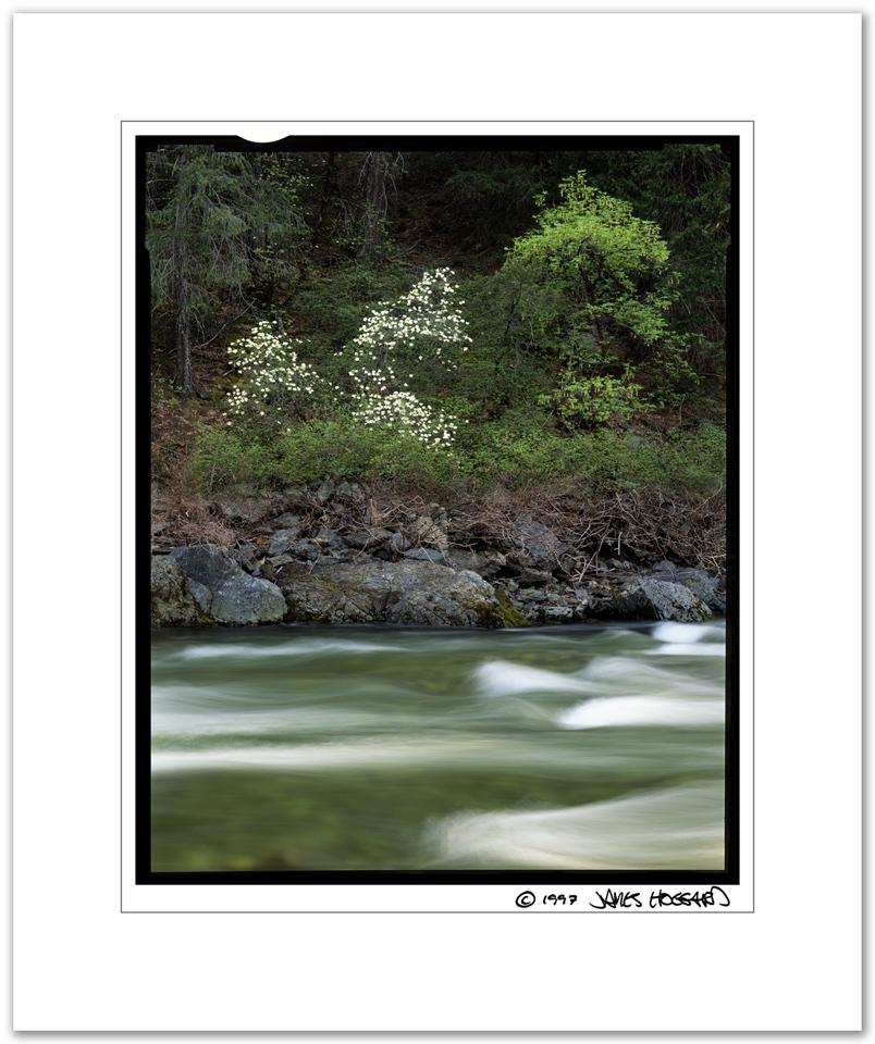 Yuba-River-Dogwoods