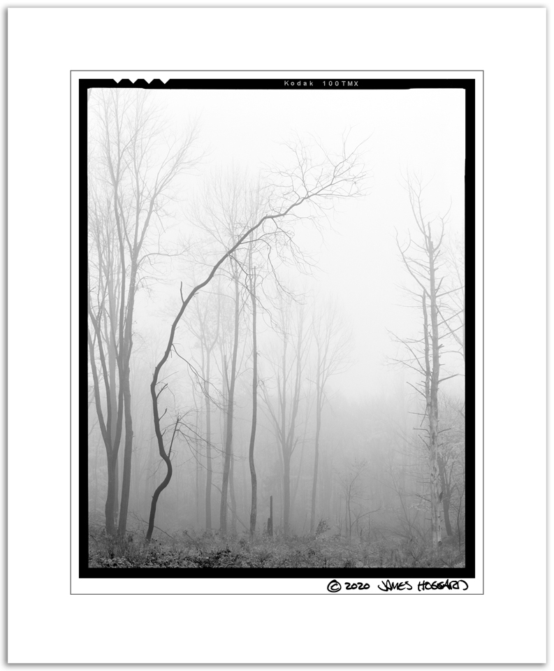 Boutwell-Foggy-Bent-Tree-45-BW