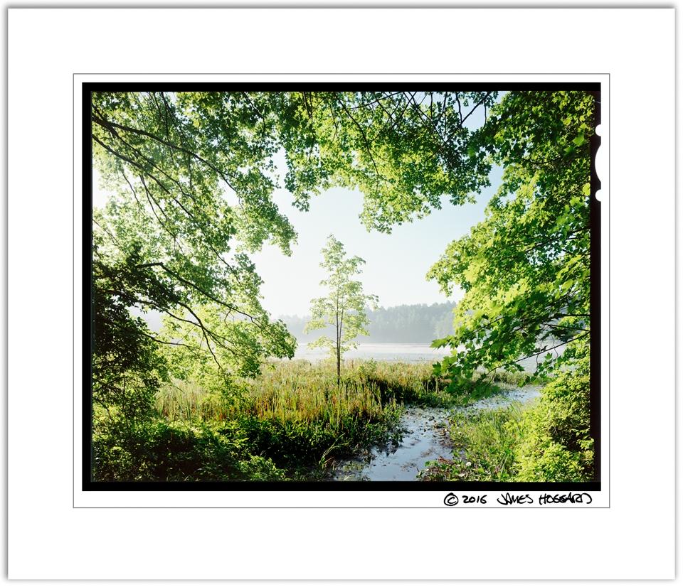Beaver-Pond-Framed-Tree2