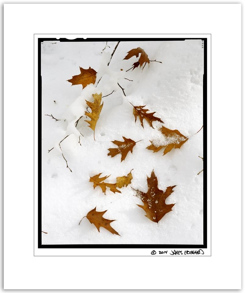 Leaves-on-Snow