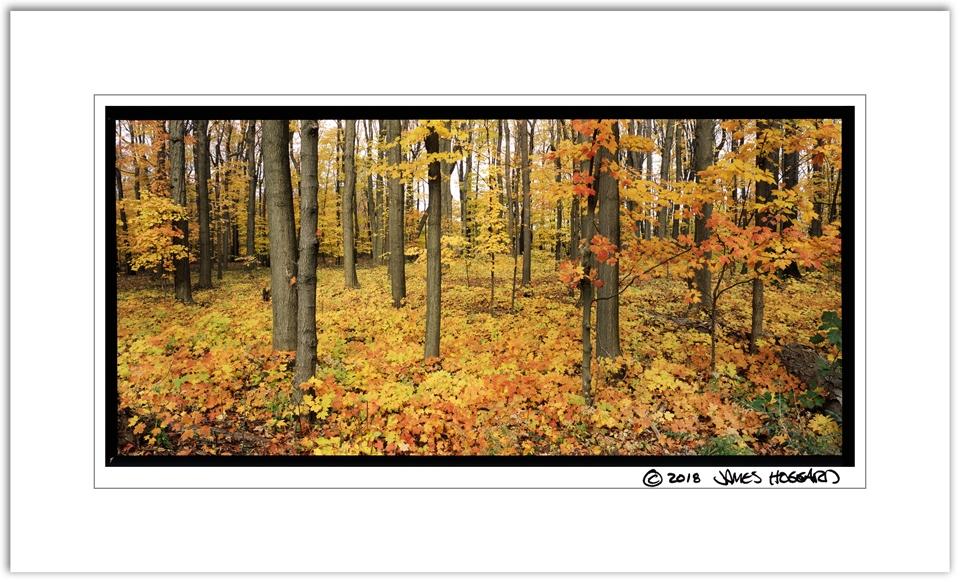 Maple-Tree-Ground-Cover