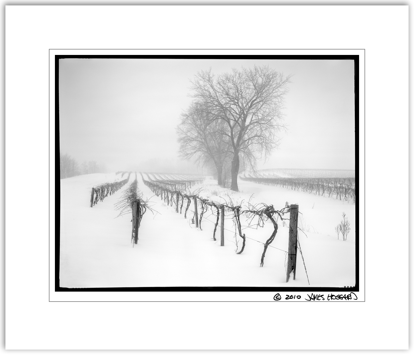 Stormy-VineyardBW