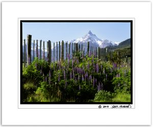 Cerro Torre, Lupine Patch