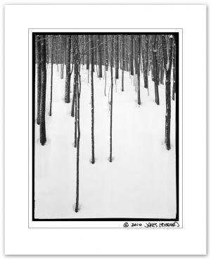 Cardot_Trees