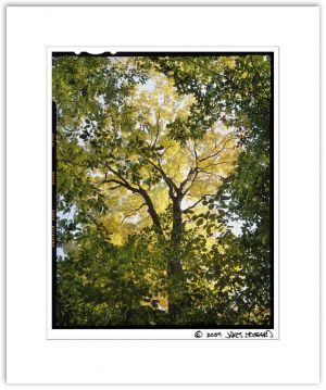 Framed_Tree2