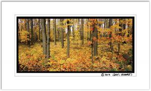 Maple Tree Ground Cover