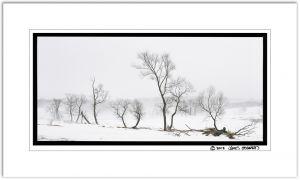 Row of Willows Fog 6x12