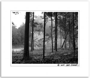 c42-Alex_Leaning_Tree2